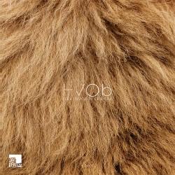 Cover Artwork HVOB – Lion